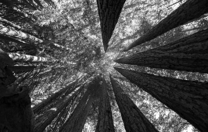 forest2.jpeg